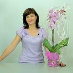 Практическая флористика. Мастер класс. Подарочная упаковка Орхидеи!