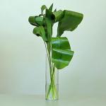 Практическая флористика. Мастер класс. 7 способов трансформации аспидистры.