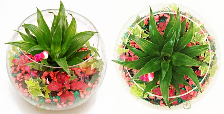 Мастер класс. Делаем Флорариум из комнатных растений.
