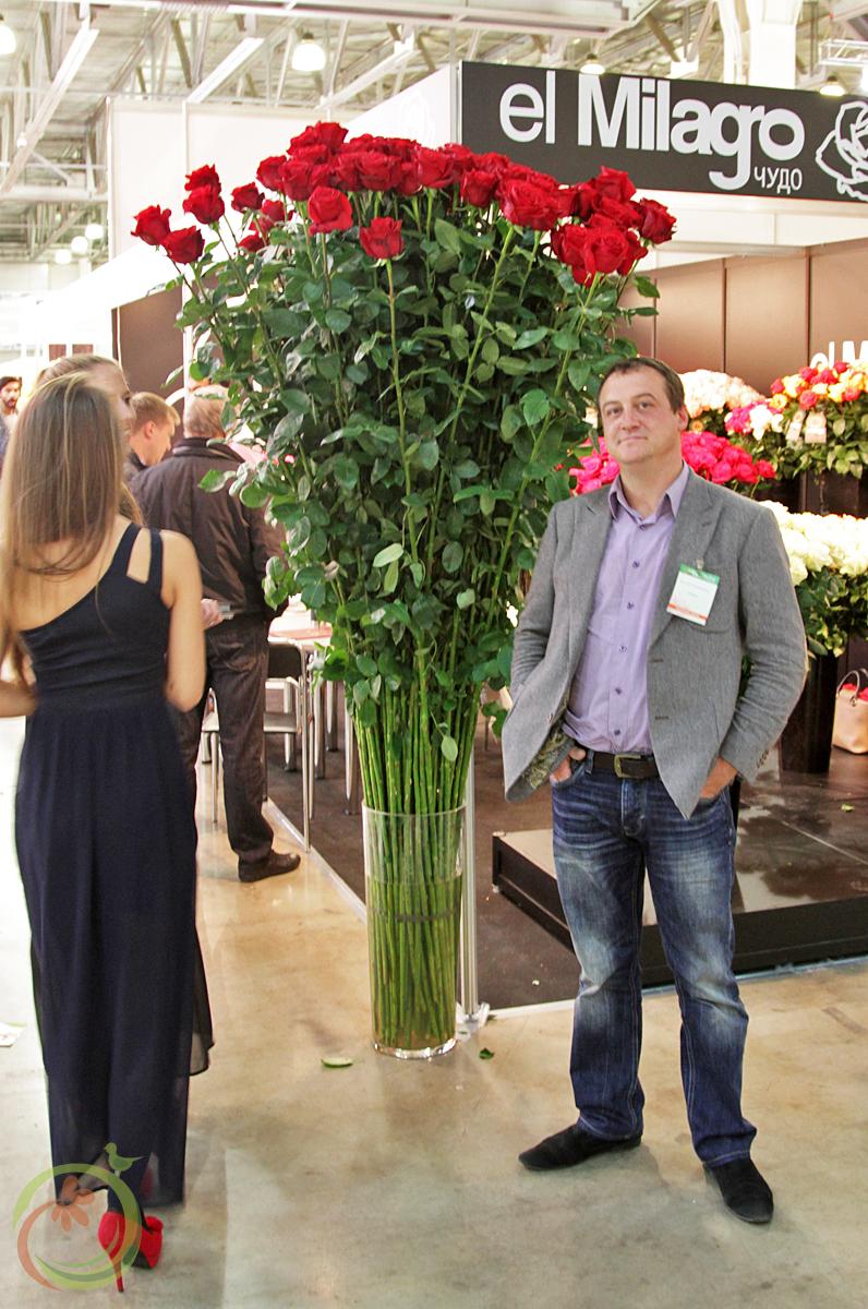 Двухметровые розы не предел высоты!