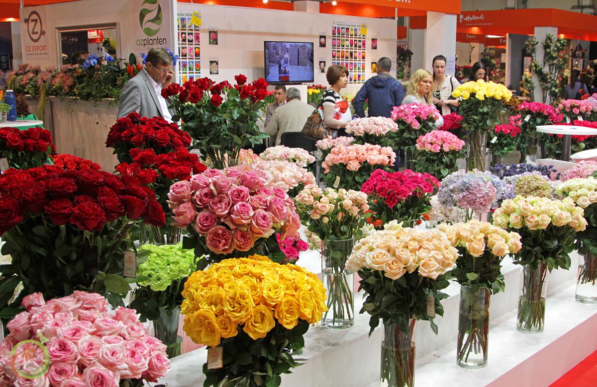 Розы огромными букетами стояли на каждом шагу