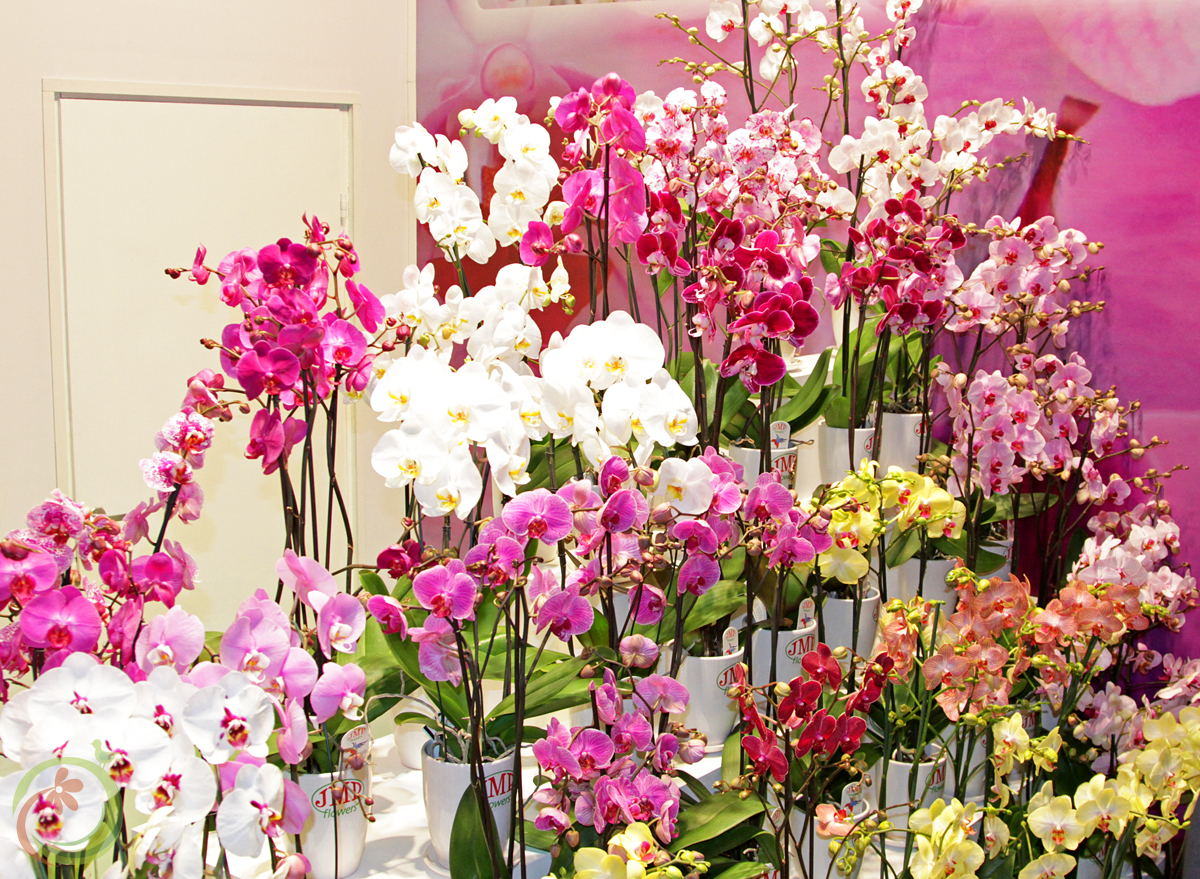Со всех сторон сияли радуги из красивейших цветов