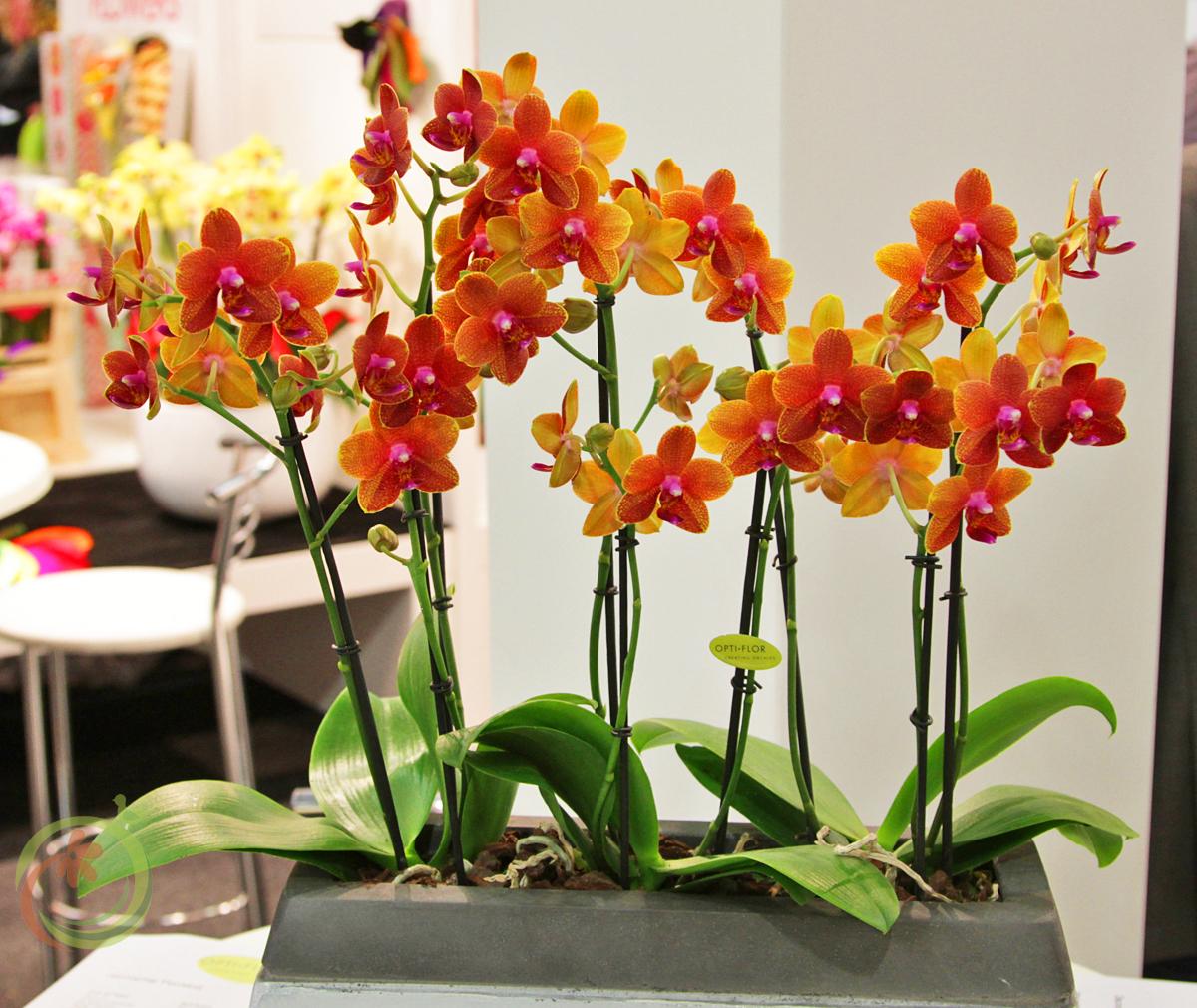 Слильная компания орхидей